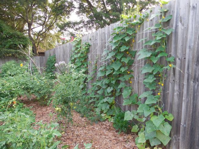 Easy DIY Cucumber Trellis