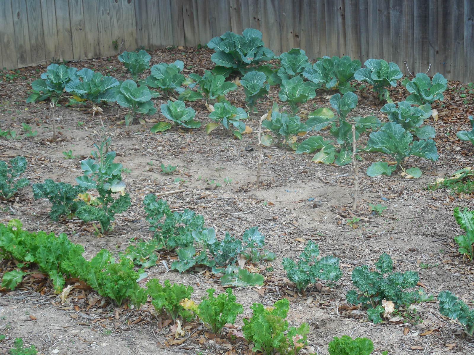 Florida vegetable garden Coffee to Compost