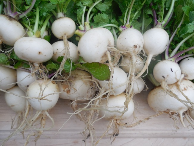 'White Egg' turnips