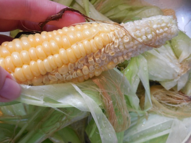 incomplete corn pollination