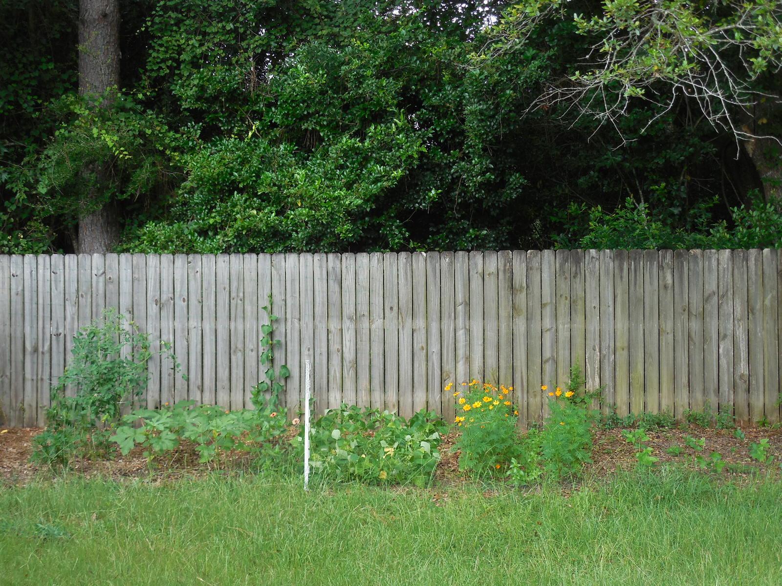 North Florida vegetable garden Coffee to Compost